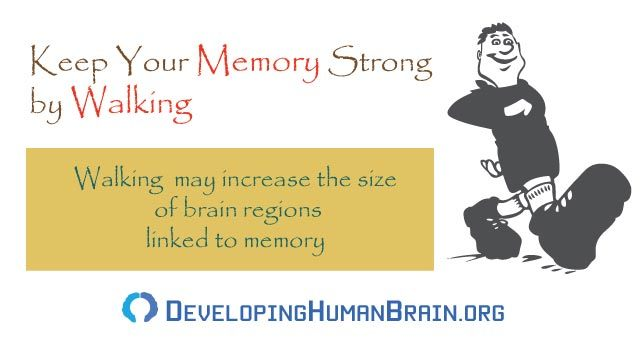 improve memory by walking